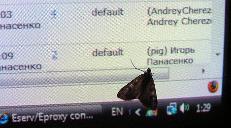 eserv bug